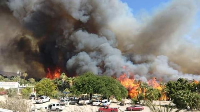 Reportan fuerte incendio en palmares del oasis de San Ignacio