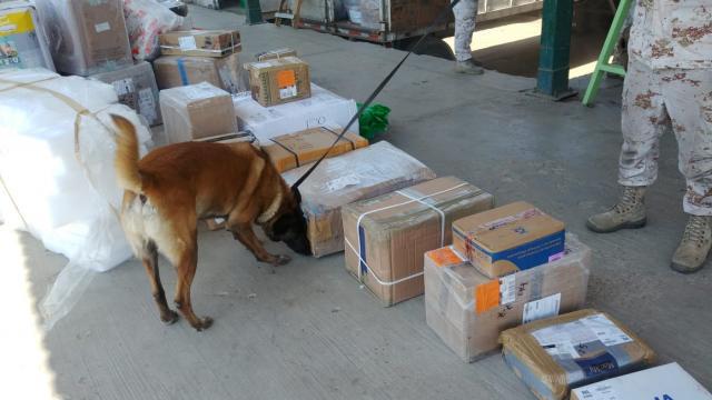 SEDENA asegura metanfetamina y fentanilo en Baja California Sur
