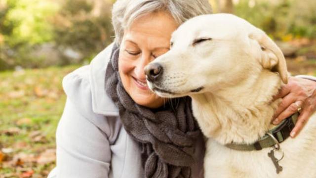 Mascotas mejoran respuesta de medicación en adultos mayores: experto