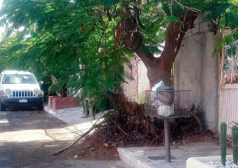 Denuncian la obstrucción por árboles crecidos en Indeco