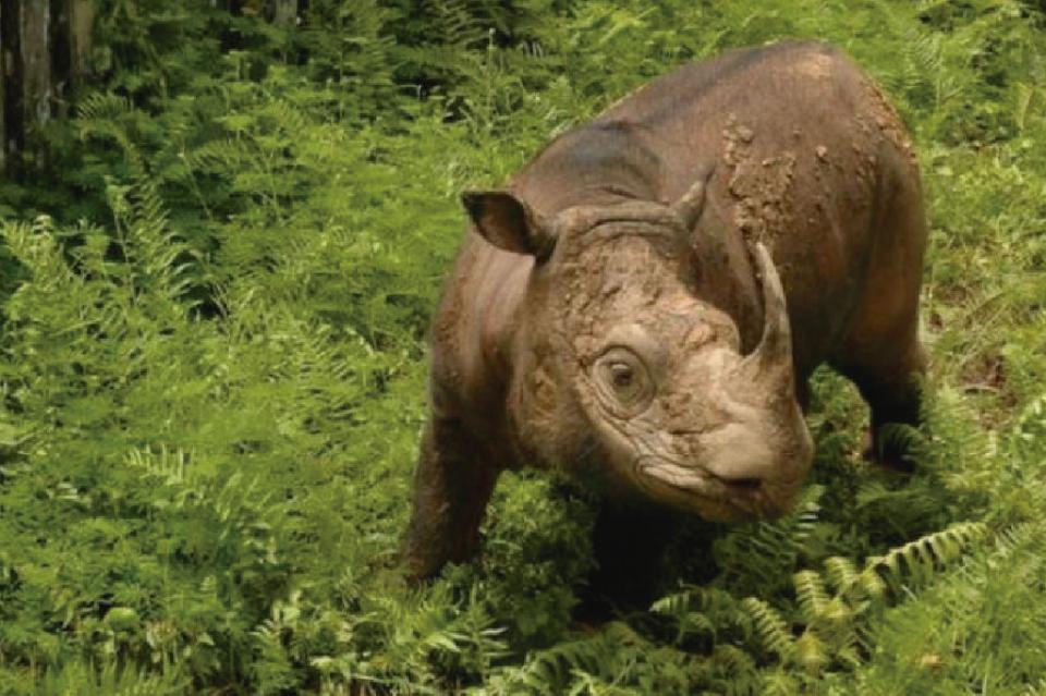 Declaran extintas a dos especies de animales y 6,721 en peligro crítico