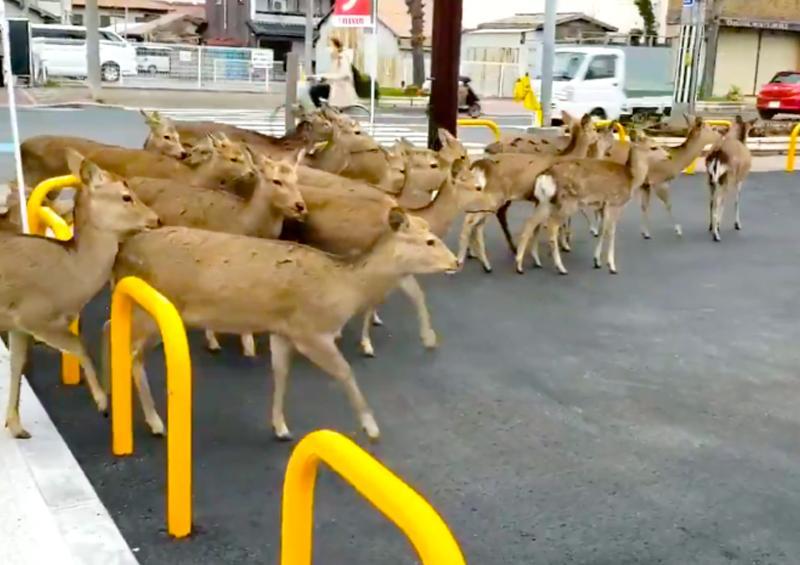 Animales salvajes retoman las calles