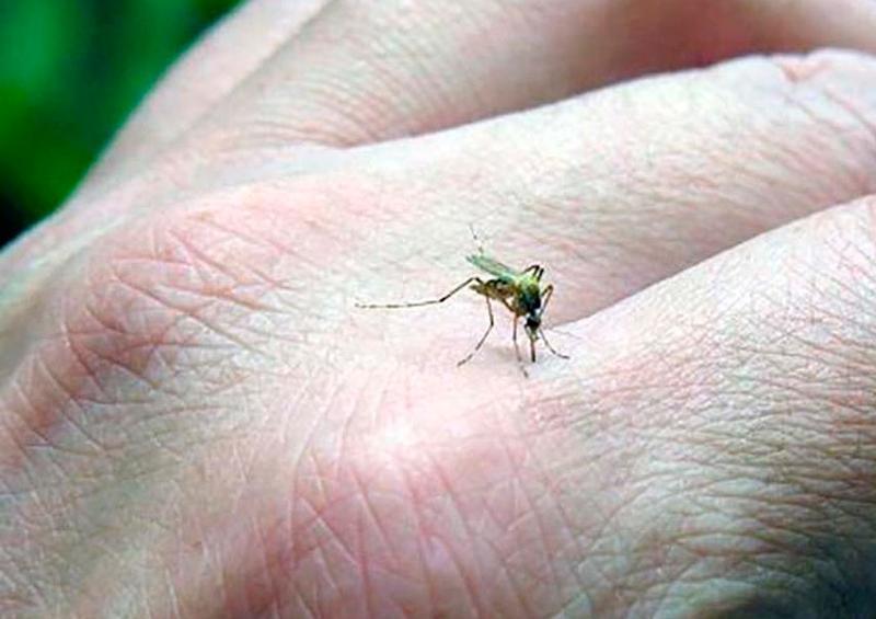 Crecen contagios por dengue e influenza en Jalisco