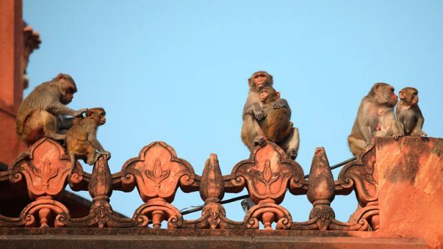 Monos derrumbe pared