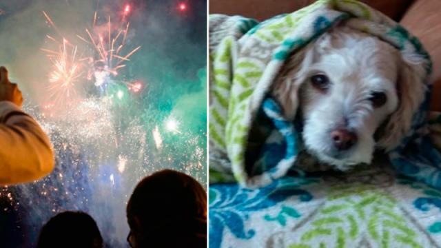 Sonidos de cohetes pueden matar a perros: especialista
