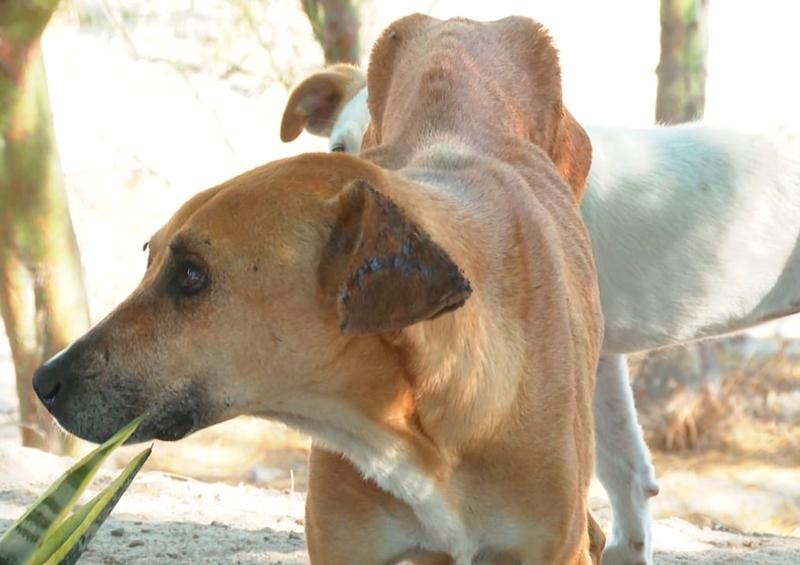 A falta de regulación, crece número de perros en abandono