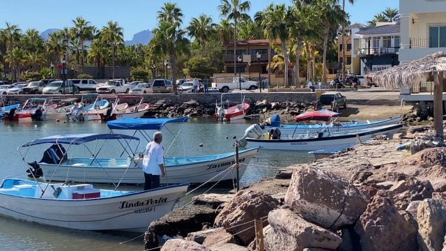 Avistamiento de ballenas en Loreto