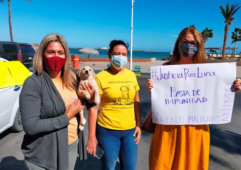 Paceños piden justicia para la perrita Luna en Los Cabos