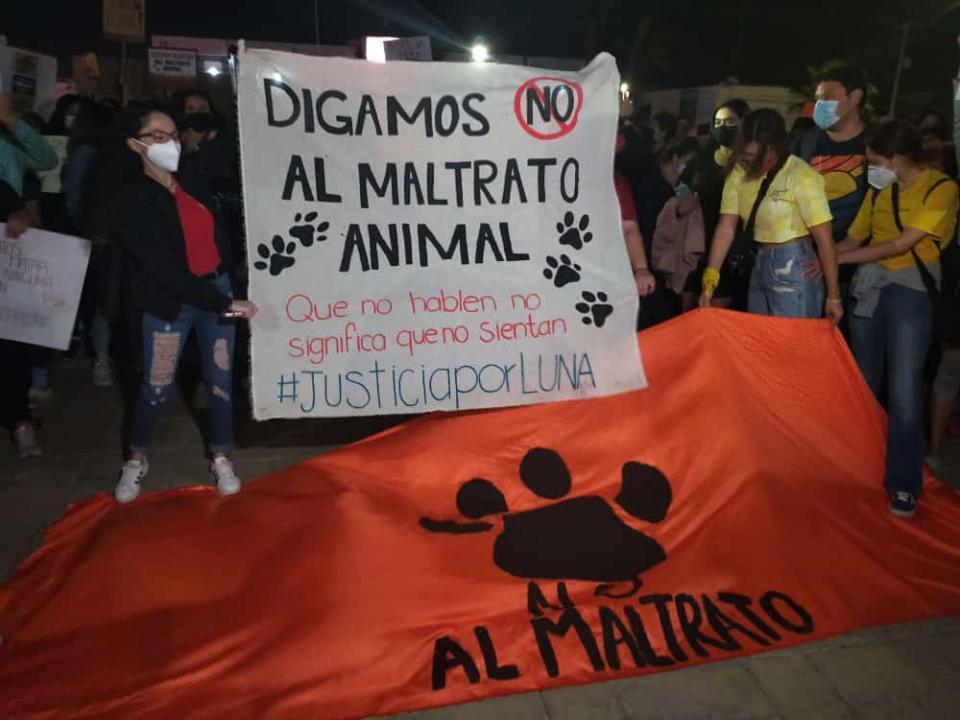 Manifestación contra el maltrato animal en La Paz
