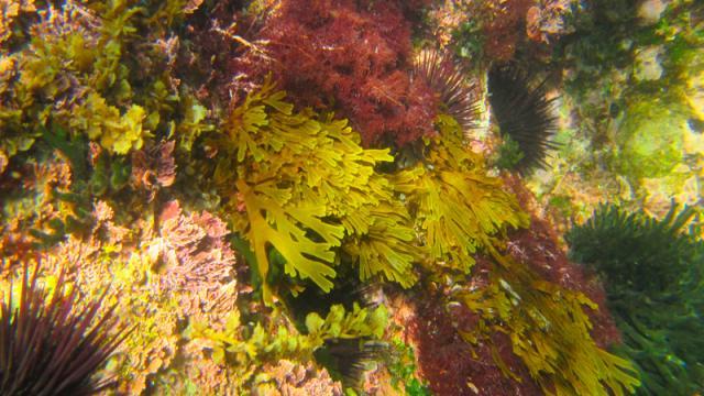 Las algas: un recurso natural de servicios ecosistémicos
